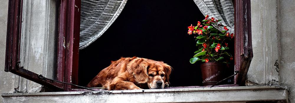 10 tipp öreg kutyusoknak – 2. rész